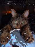 Kat met klauwen 2 stock foto's