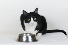Kat met lege voedselkom Stock Foto