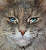 Kat met menselijke ogen Royalty-vrije Stock Foto's