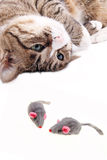 Kat met muisstuk speelgoed Stock Foto