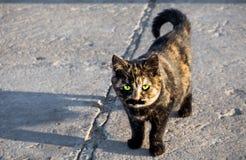 Kat met mustages Stock Foto