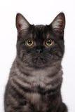 Kat met ogen Royalty-vrije Stock Afbeeldingen