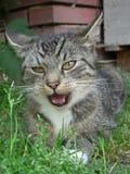 Kat met open mond Stock Fotografie