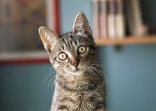 Kat met overgeheld hoofd Stock Afbeeldingen