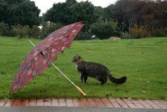 Kat met paraplu Stock Afbeelding