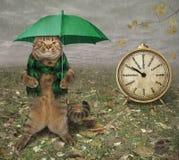 Kat met paraplu en klok stock fotografie