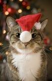 Kat met rode hoed Royalty-vrije Stock Afbeeldingen