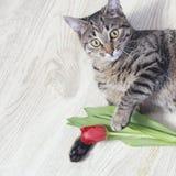 Kat met rode tulpenbloem Royalty-vrije Stock Fotografie