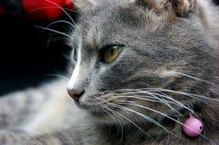 Kat met roze klokken Stock Foto
