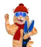 Kat met skis Royalty-vrije Stock Afbeelding