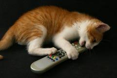 Kat met TVafstandsbediening Royalty-vrije Stock Afbeelding