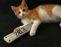 Kat met TVafstandsbediening Stock Afbeeldingen