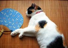 Kat met ventilator Royalty-vrije Stock Foto
