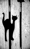 Kat in Omheining Royalty-vrije Stock Foto's