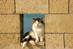 Kat in omheining Stock Foto's