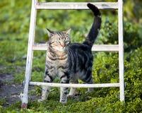 Kat onder de treden Stock Afbeelding
