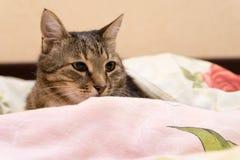Kat onder een deken Stock Foto