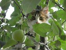 Kat onder groene bladeren royalty-vrije stock afbeelding