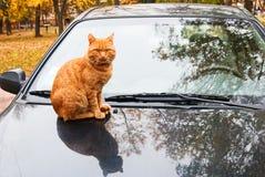 Kat op auto Stock Afbeelding