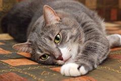 Kat op bank Stock Foto