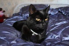 Kat op bed Stock Fotografie