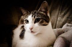 Kat op bed Royalty-vrije Stock Afbeelding
