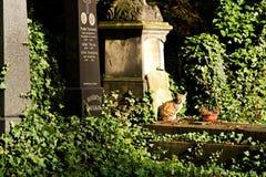 Kat op begraafplaats Royalty-vrije Stock Foto