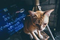 Kat op bovenkant Stock Foto