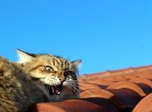 Kat op Dak Royalty-vrije Stock Afbeeldingen