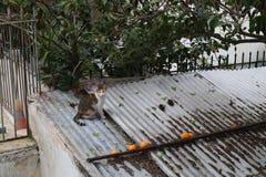 Kat op dakbovenkant stock afbeeldingen