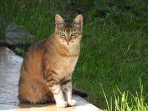 Kat op de achtergrond van het landelijke natuurlijke milieu op een de zomerdag royalty-vrije stock afbeelding