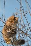 Kat op de boom Stock Foto's