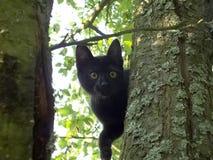 Kat op de boom Stock Afbeeldingen