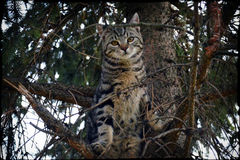 Kat op de boom Royalty-vrije Stock Afbeelding