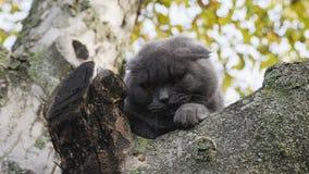 Kat op de boomtakken stock videobeelden
