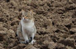 Kat op de grond Royalty-vrije Stock Afbeelding