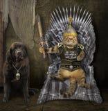 Kat op de ijzertroon en een hond stock afbeeldingen