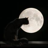 Kat op de Maan Royalty-vrije Stock Foto