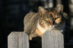 Kat op de Omheining stock foto's