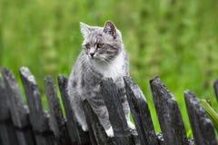 Kat op de Omheining Stock Afbeelding
