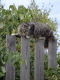Kat op de Omheining Royalty-vrije Stock Afbeelding