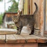 Kat op de portiek van een dorpshuis nave Stock Afbeelding