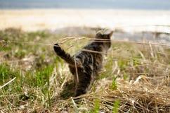 Kat op de rivierbank stock afbeelding