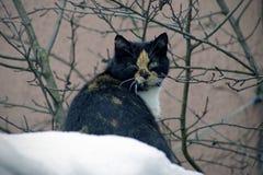 Kat op de sneeuw Maart komt naderbij Animatie in aard stock foto's