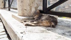 Kat op de straat royalty-vrije stock afbeelding