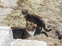 Kat op de straat Twee mooie straatkatten zitten door de treden stock foto