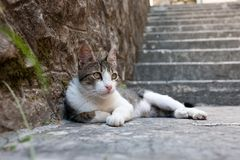 Kat op de treden stock afbeeldingen