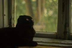 Kat op de vensterbank stock foto
