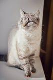 Kat op de venstervensterbank Royalty-vrije Stock Fotografie