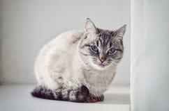 Kat op de venstervensterbank Stock Afbeeldingen